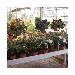 piante in serra