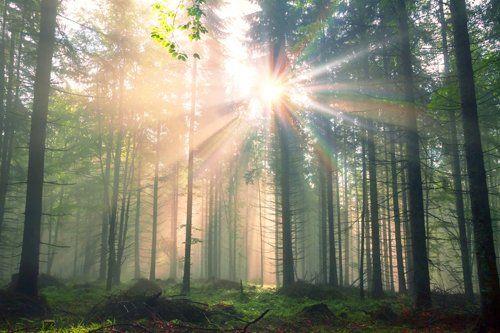 bosco con sole tra gli alberi