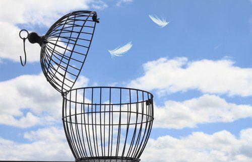 gabbia  per uccelli aperta con due piume bianche che volano