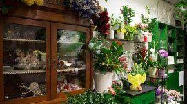 Delle mensole con dei vasi di fiori