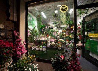 Vista dall'esterno di un negozio di fiori con delle piante fiorite