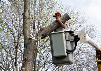 Tree Service Fairfield, CT