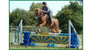 Riding school - Sudbury, Suffolk - Twinstead Riding School  - Riding Lessons