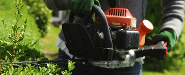 A hedge being trimmed as part of mowing and garden services in Auckland