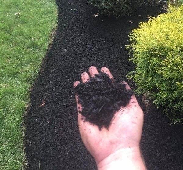Black Dyed Mulch Installed