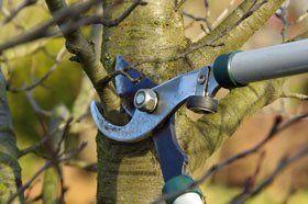 Tree services - Stockport, South Manchester, Sale, Cheadle, Macclesfield, Bramhall, Poynton, Hazel Grove - Tall Trees - Tree Pruning