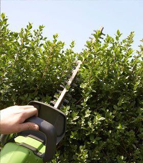 Tree services - Stockport, South Manchester, Sale, Cheadle, Macclesfield, Bramhall, Poynton, Hazel Grove - Tall Trees - Hedge Cutting