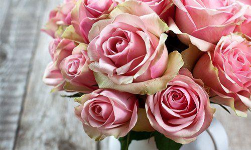 consegniamo direttamente a casa vostra o dei vostri cari piante e fiori. Regalate un sorriso a chi volete bene