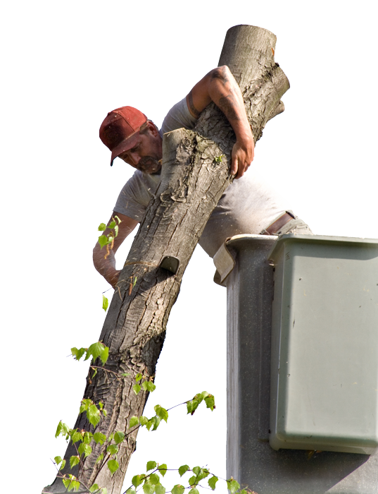 Tree Service for Trumbull, CT