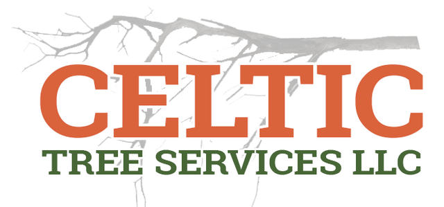 Tree Service Westport, CT