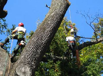 Tree Service New Canaan, CT