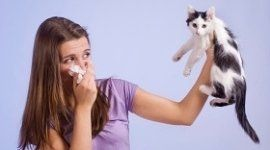 cura allergia pelo di animali, trattamento allergia pelo di animali