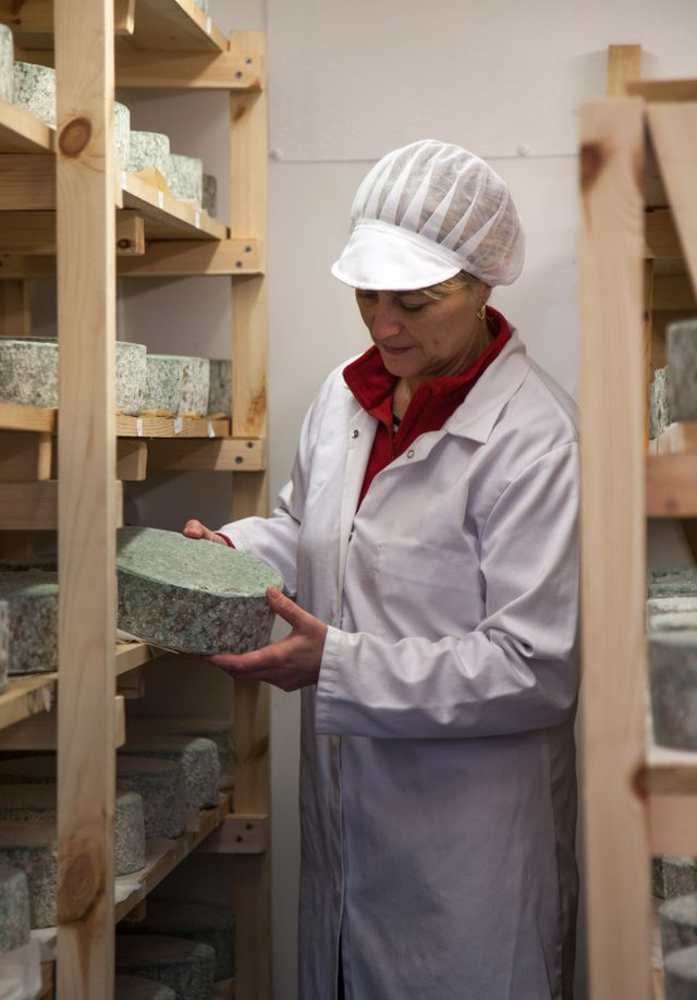 Julie checks the maturer cheeses over to see whether they are ready to be sold. Ponsanooth, Cornwall. 13.11.15