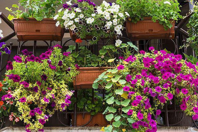 Un balcone con dei vasi con delle petunie