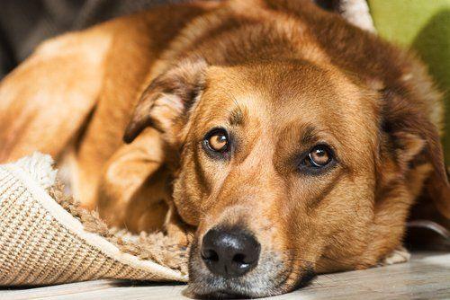 un cane su un tappeto
