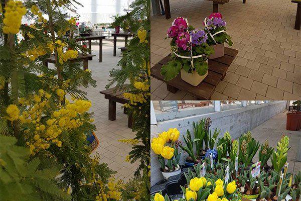 Tre foto di varie composizioni floreali