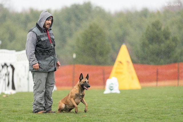 Dog Trainers   Oklahoma City, OK   Southern Warrior K9