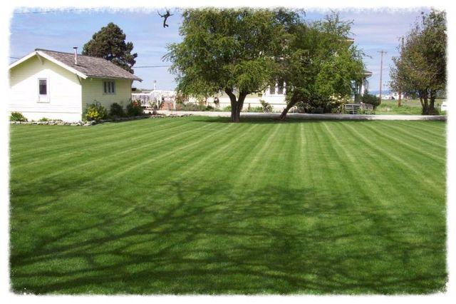 lawn seeding company