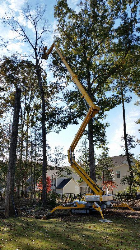tree removal zebulon