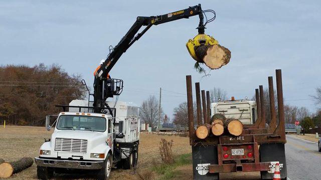 Smithfield Tree Removal | A+ Tree & Crane Team