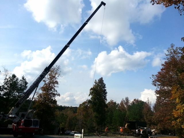 tree removal service cary north carolina
