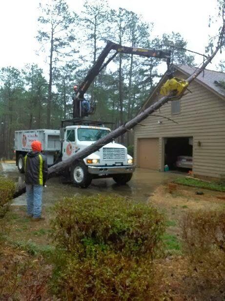 emergency tree removal mebane nc