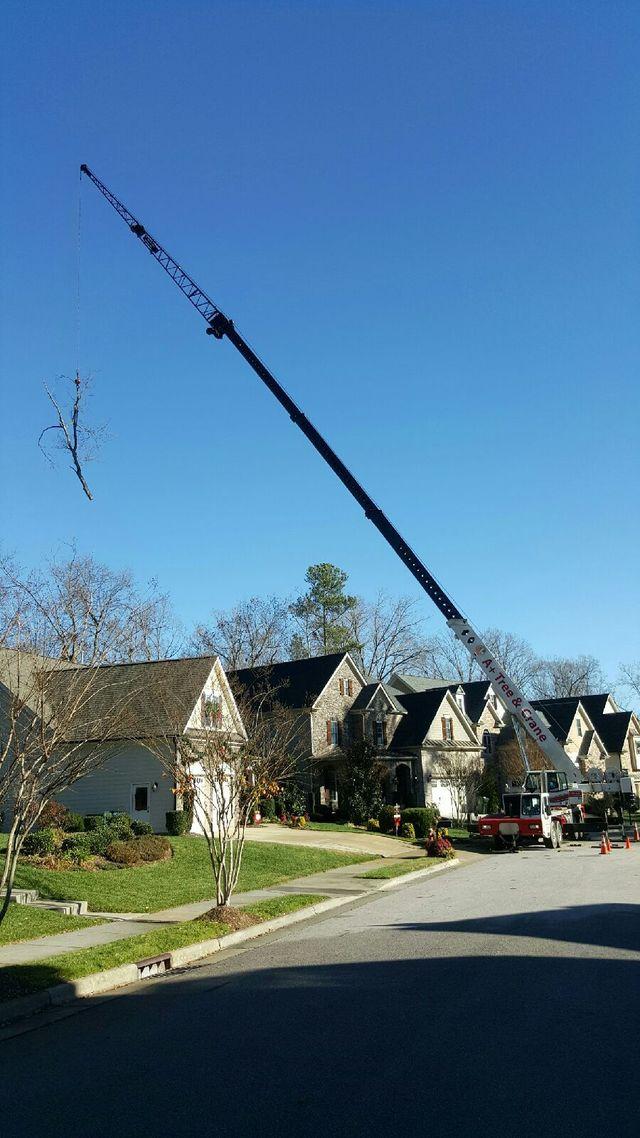 tree removal apex