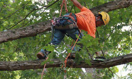 tree removal service central north carolina