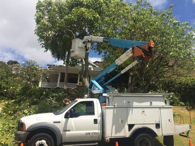 Tree being chopped from crane by Sherwood's Tree Service professionals