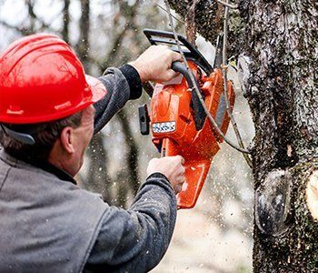 Sherwood's Tree Service professional sawing a tree branch