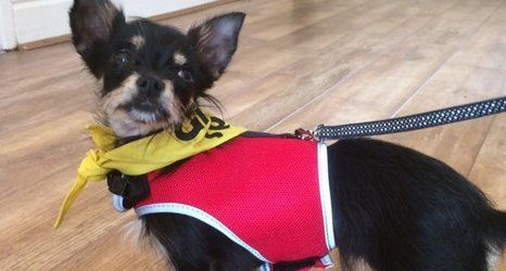 dog behavioural consultation