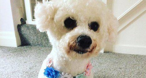 A white puppy