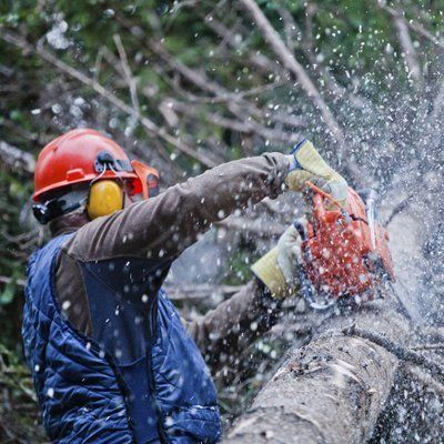 Tree sectional felling