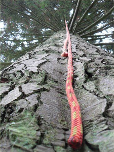 A rope leading up a tree