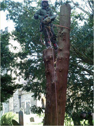 Man felling a tree
