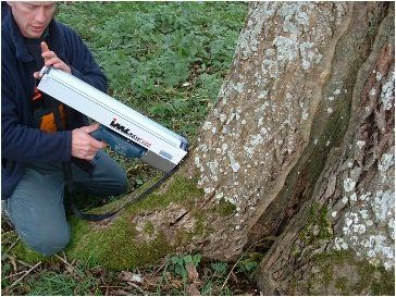 Tree surveying and report writing