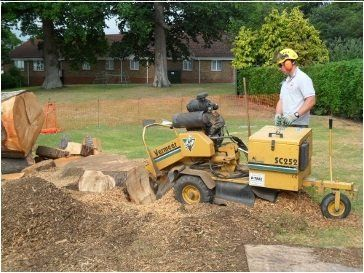 Stump grinding and removal.