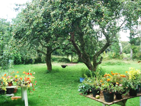 Pixies Hall Orchard