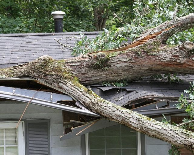 Emergency Tree Service Image