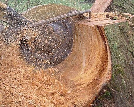 Stump Grinding Image