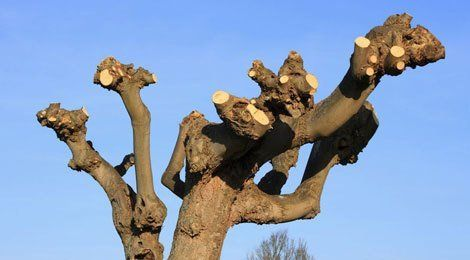 Tree pruning & crown reductions
