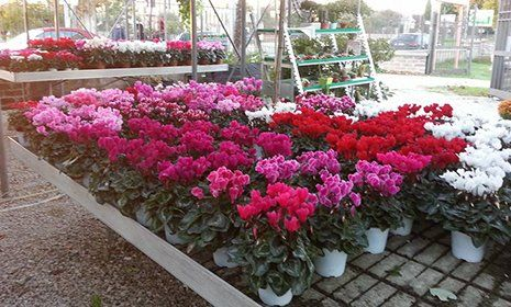 Piante fiorite di tonalità rossa e bianca