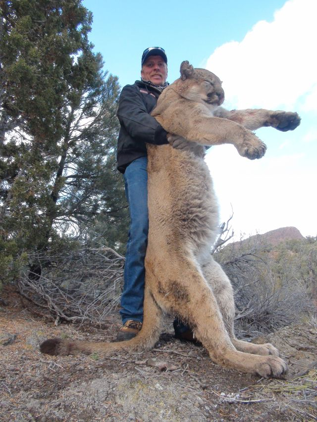 high success Nevada trophy hunts