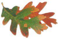 oak leaf motif