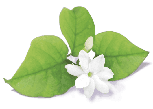 jasminum flower avatar