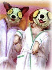 Rejuvenating Pet Spa