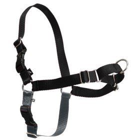 Recommended harness for Pug dog