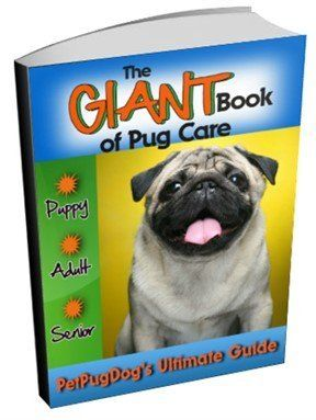 Pug Dog Names | 1000 Names Only for the Pug Breed