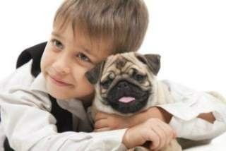 Pug dog dental care