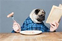 pug-dog-eating-dinner-funny
